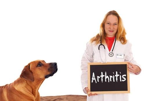 Do copper collars serve in arthritis in dogs?