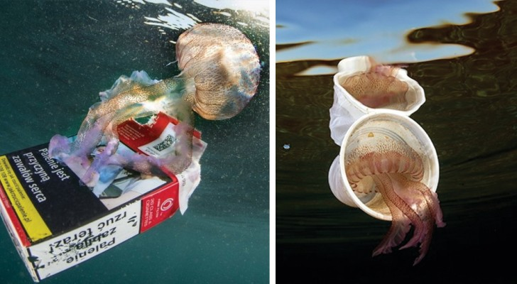 An Italian diver photographs jellyfish together with the garbage: the photos show the dirt of our seas