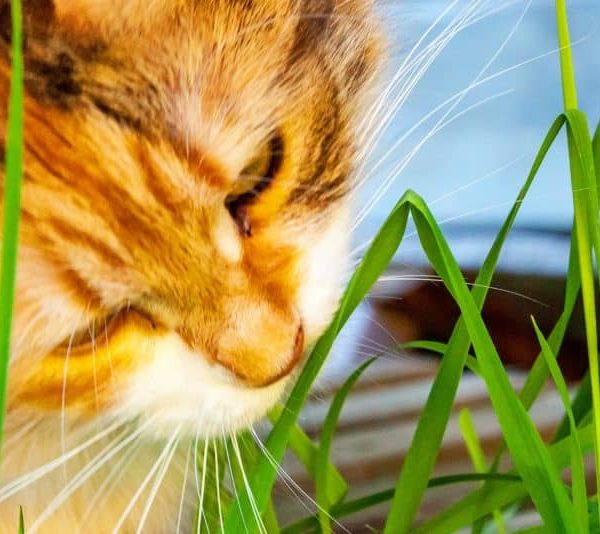 Best Catnip 2020: Buying Guide