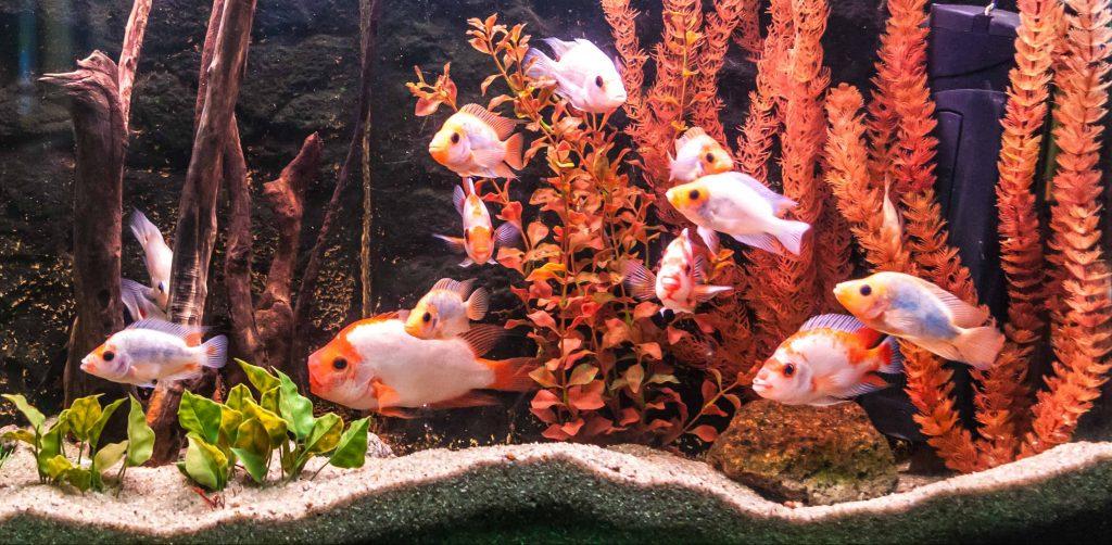 acquario-per pesci-principale-xcyp1