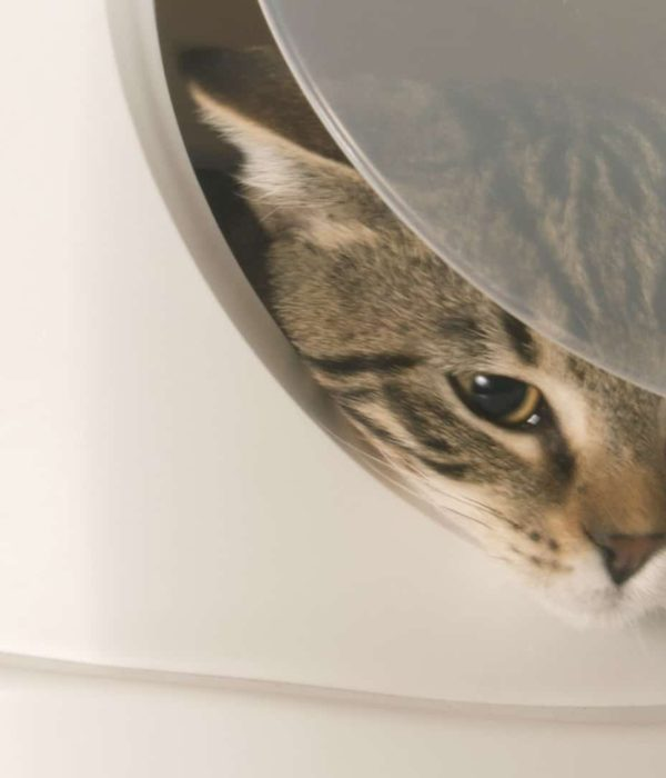 Best Self-Cleaning Litter Box 2020: Buying Guide