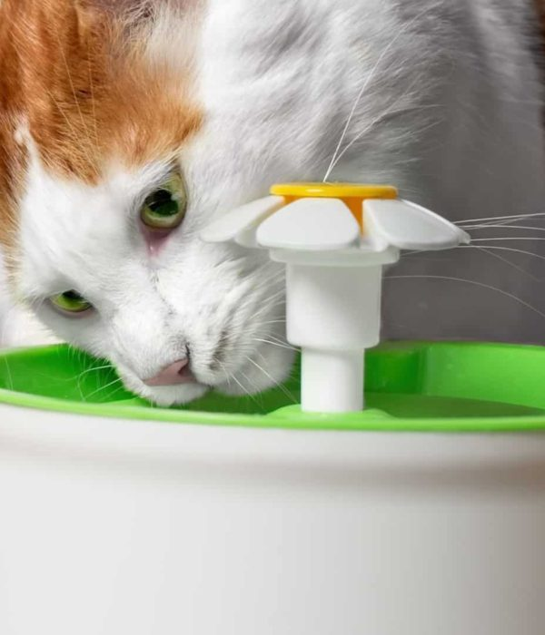 Best cat fountain 2020: Buying guide