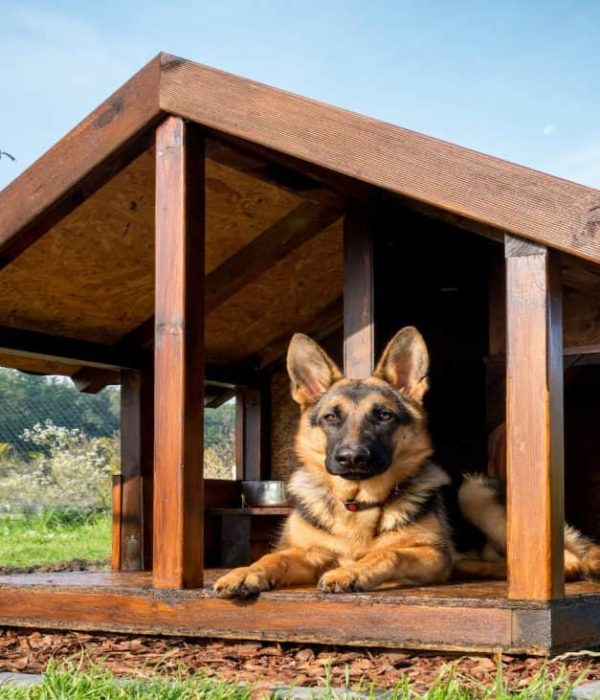 Best dog house 2020: Buying guide