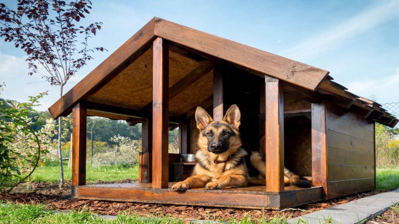 Miglior casetta per cani 2020: Guida all'acquisto