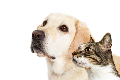Difference between the intelligence of dogs and cats - My animals
