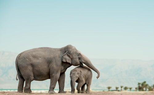 Elephants are social animals –– My animals