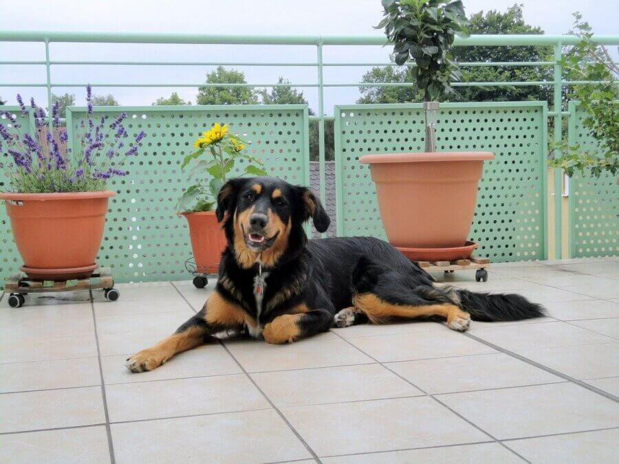 How to keep them safe? - My animals