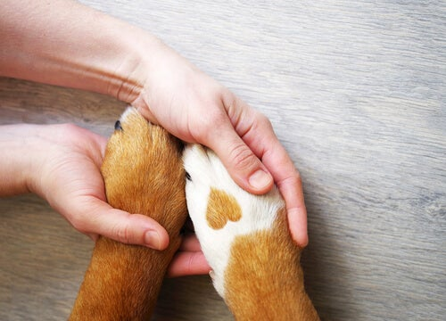 How to treat a dog's paws in winter?