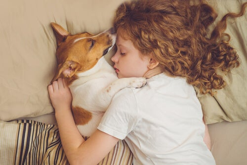 Is it advisable to share a bed with a dog? - My animals