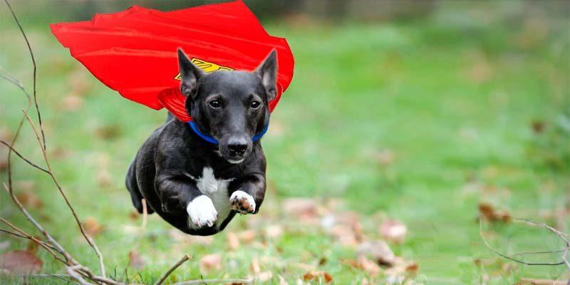 superdog-1-800x400
