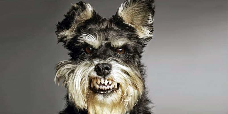 dog-aggressive-11-800x400