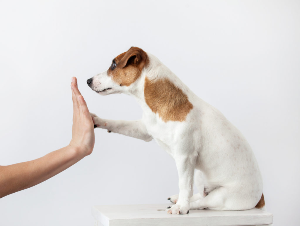 The socialization of the puppy zooplus Magazine for dogs
