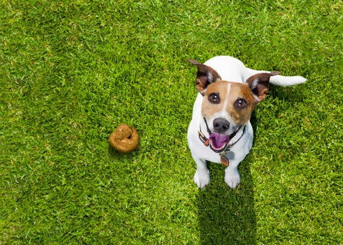 What can your dog's feces tell you?