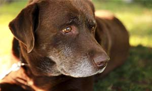 old dog-4-300x180