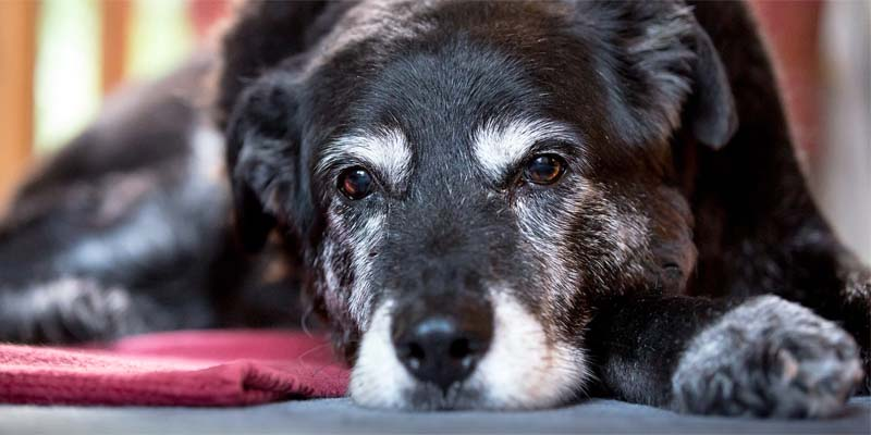 "old dog-8-800x400 ""width ="" 800 ""height ="" 400"
