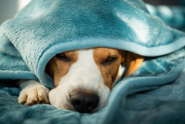 Anxiety In dogs – How to treat them?