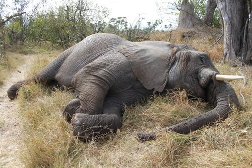 Slaughter of 100 elephants in Botswana