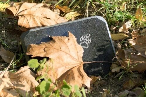 Tomb of a pet.