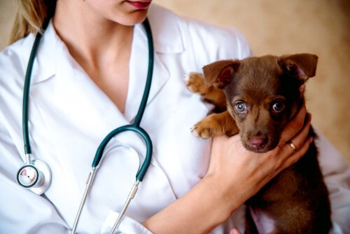 What is veterinary responsibility for negligence?