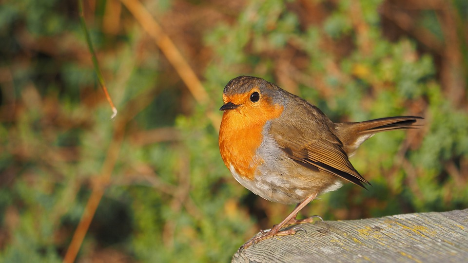 How to protect small wildlife from cats?