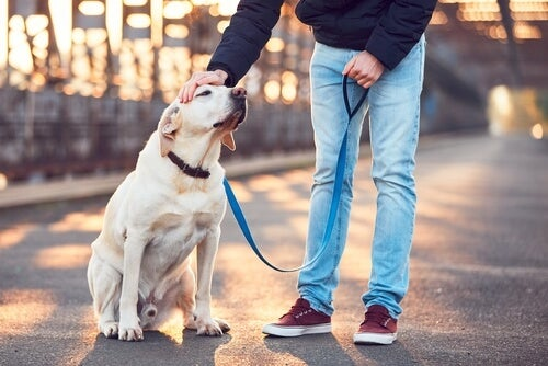 6 rules to take care of someone else's dog –
