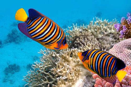 5 curiosities of goldfish – My animals
