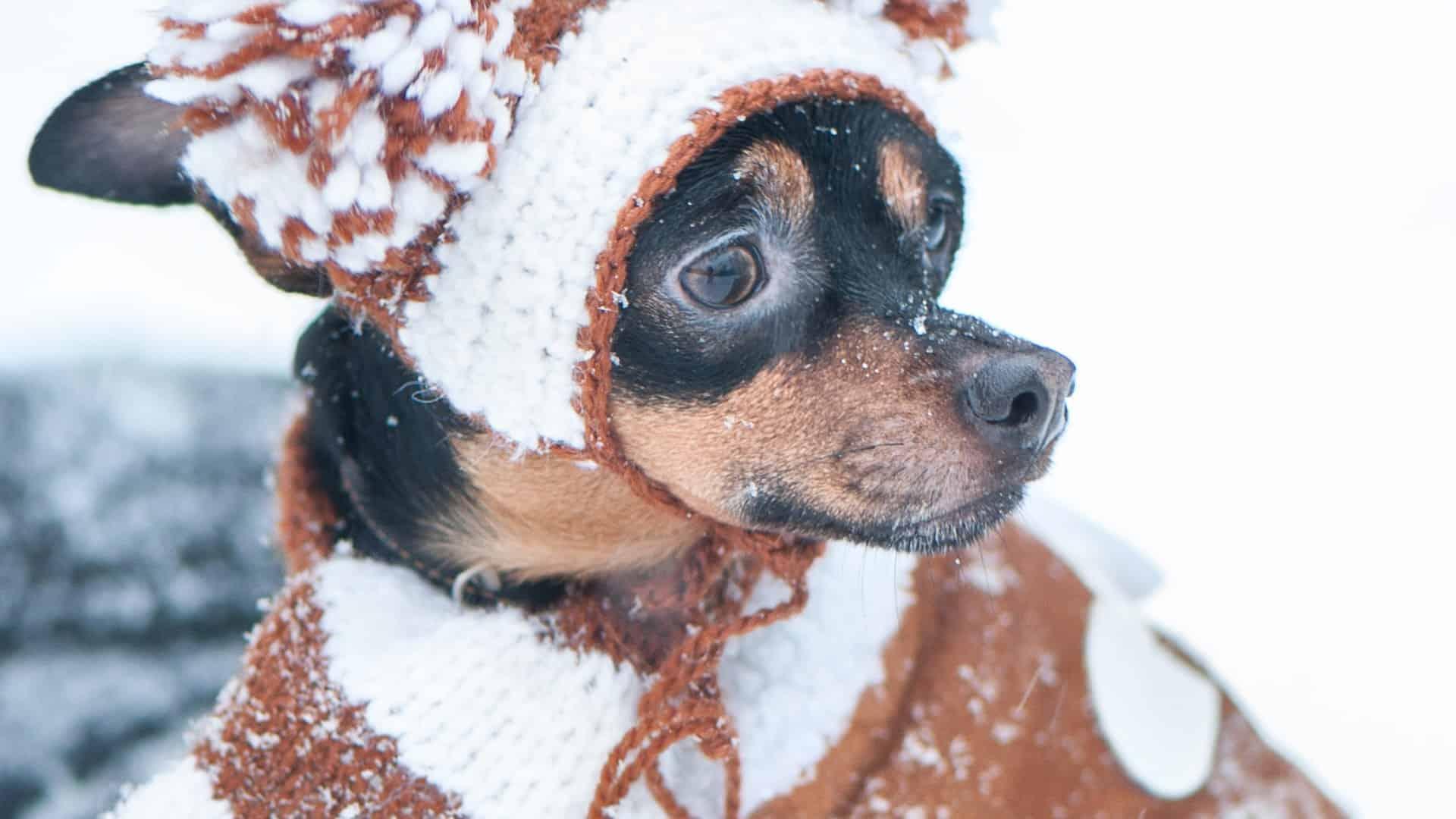 Best Dog Coat 2020: Buying Guide