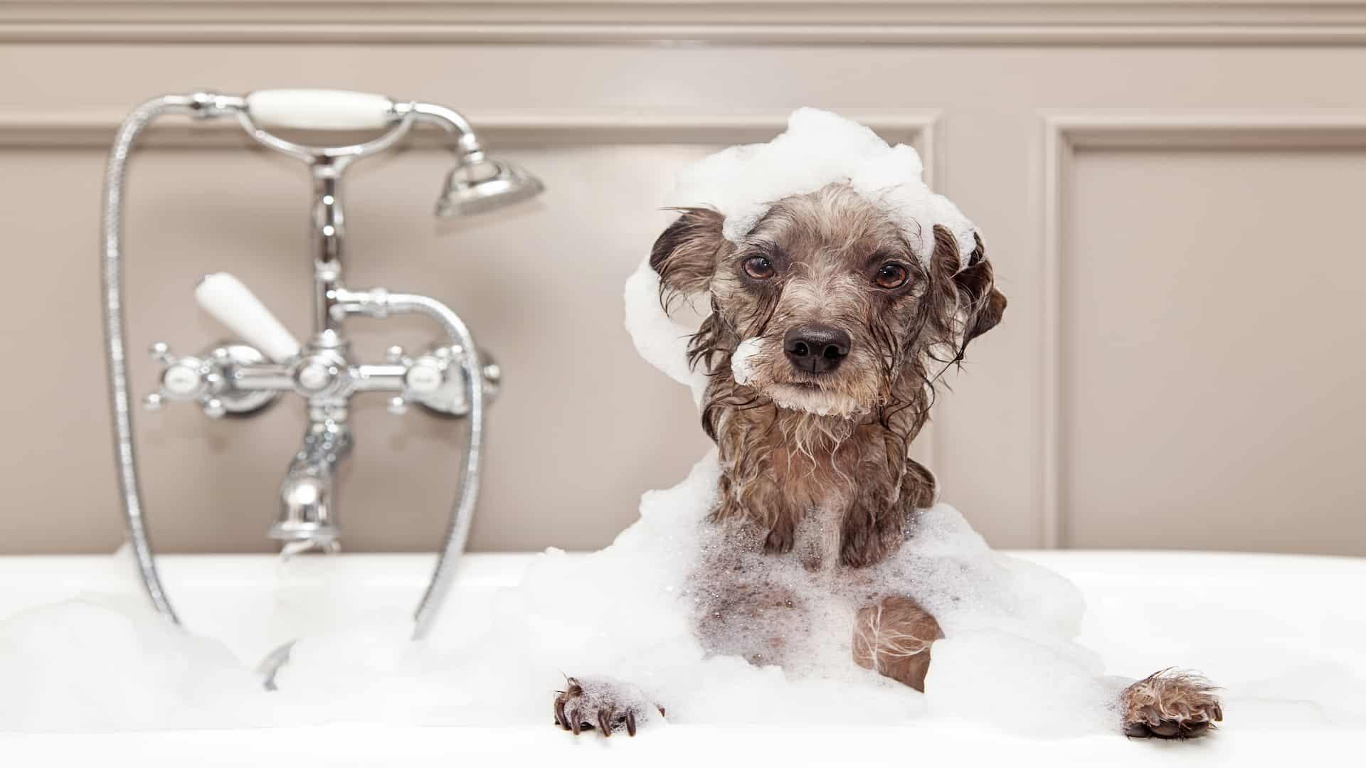 shampoo-per-cani-principale-xcyp1
