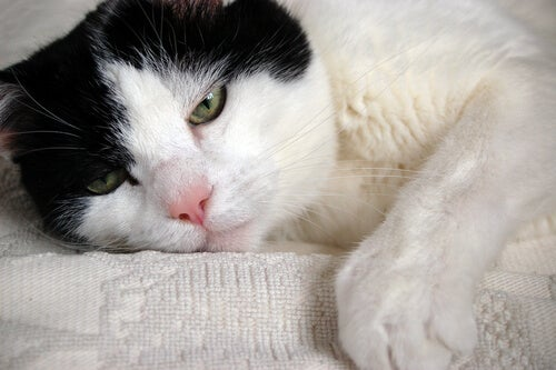 Common health problems of older cats - My animals