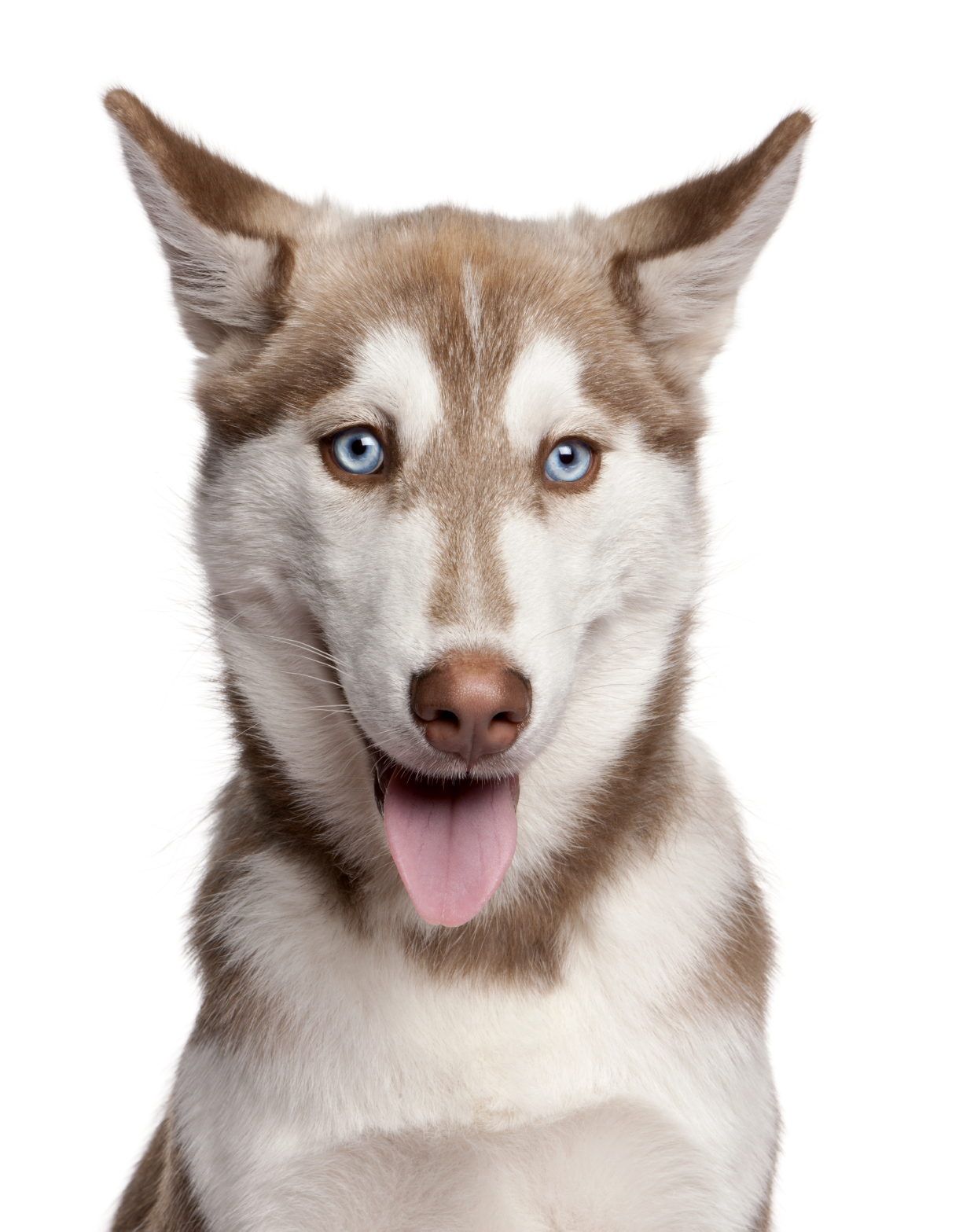 How do you know if your dog is deaf?