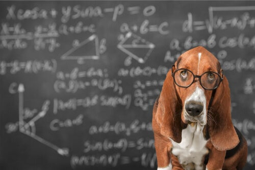 Is it possible to stimulate the intelligence of dogs? - My animals
