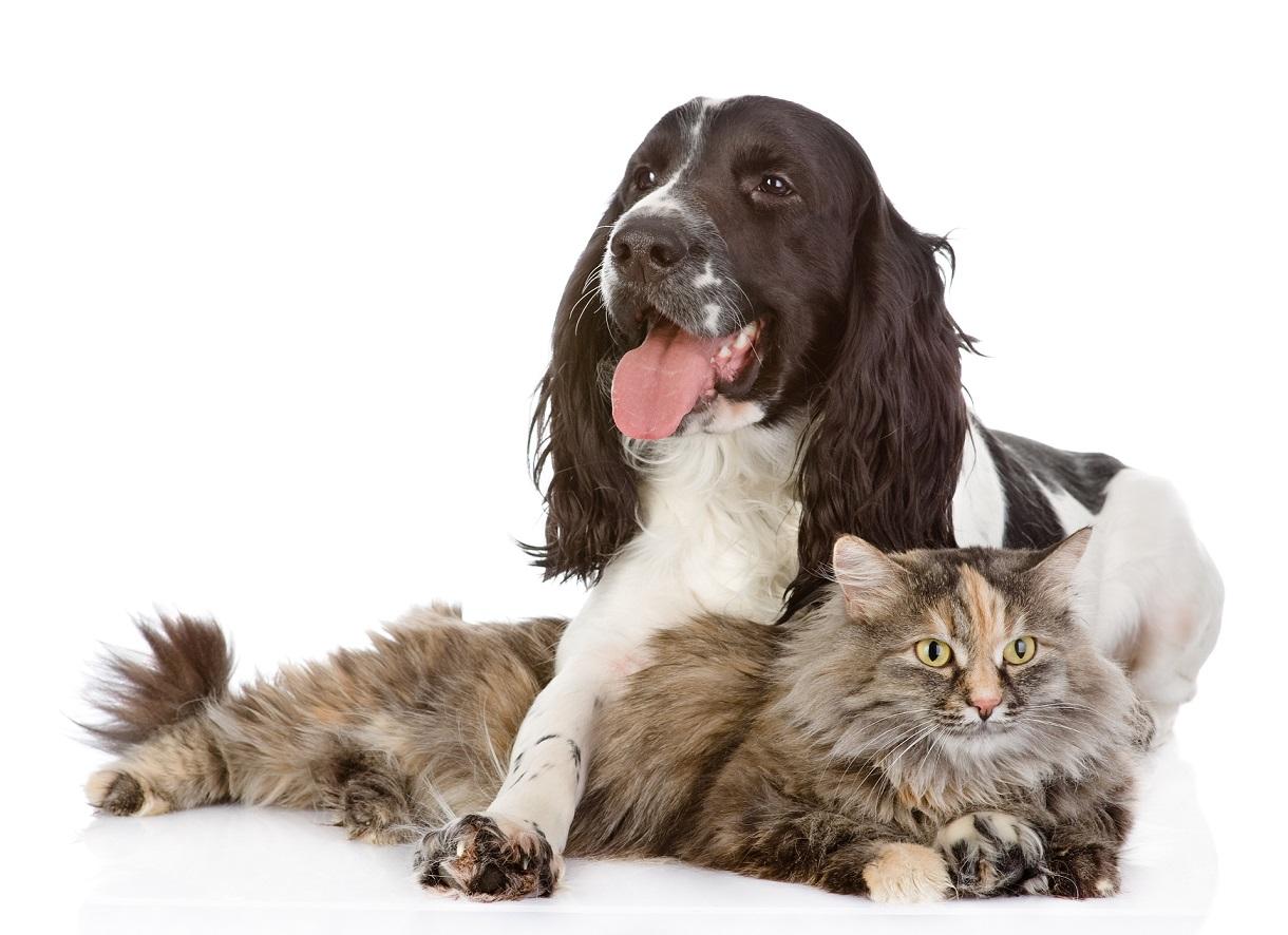 My pet has osteoarthritis, what should I do?