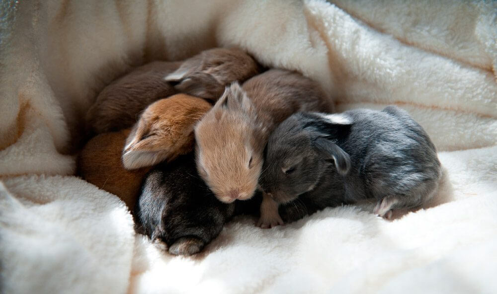 Newborn rabbits and the importance of smell –– My animals