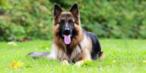 dog and territory-1-800x400