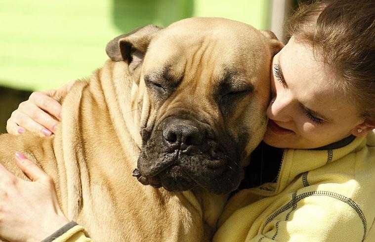 najwieksze psy swiata ranking