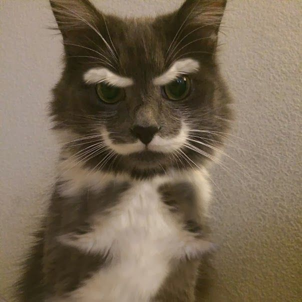 funny cats 1