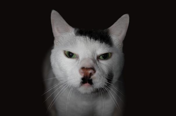 funny cats 5