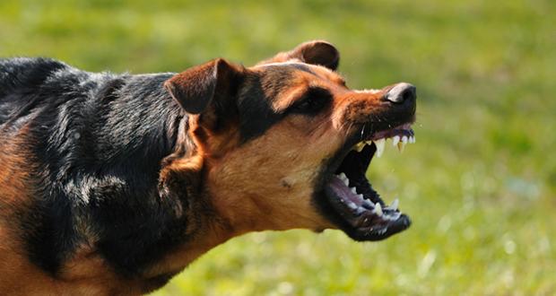 dangerous animals dogs