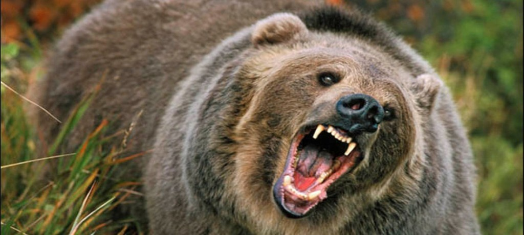 TOP 10 most dangerous animals Curiosities From The World, Facts,