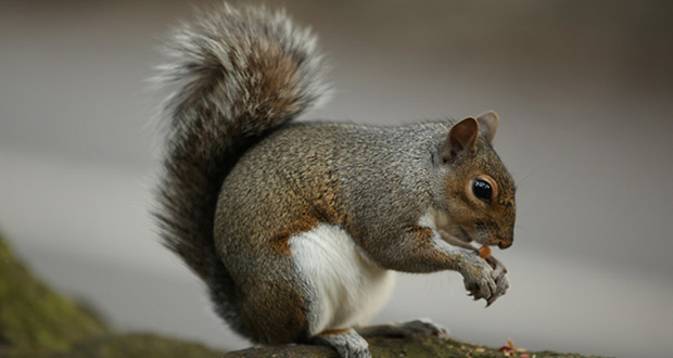 the most intelligent animals squirrels