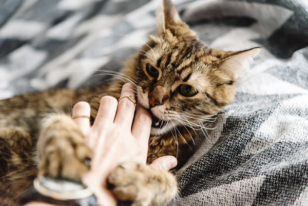 Cat's love biting - what does it mean? -