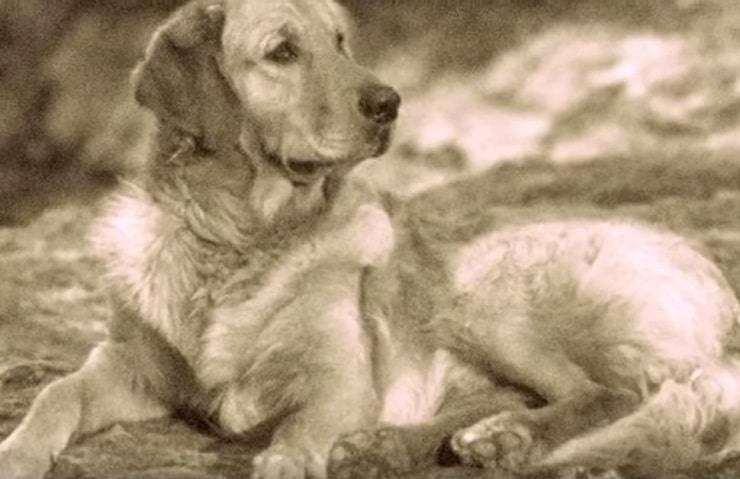 extinct dogs Russian Tracker