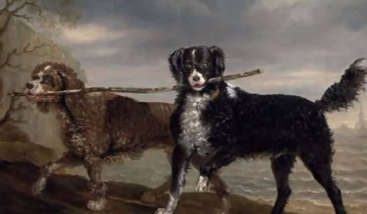 extinct dogs English Water Spaniel