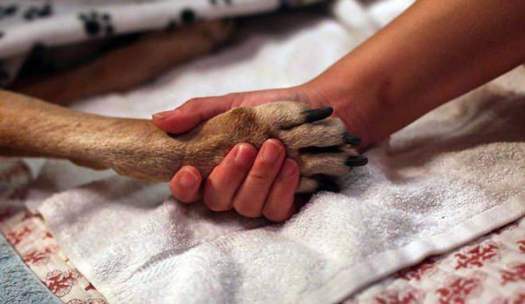 euthanasia dog owner must assist
