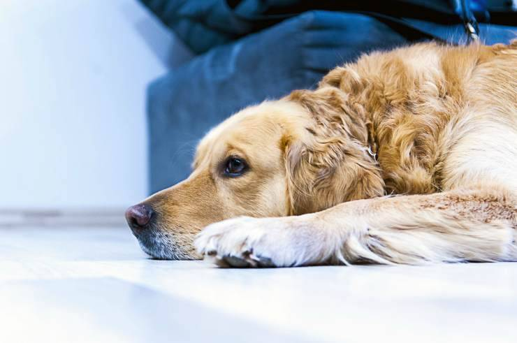 The sad dog (Pixabay photo)