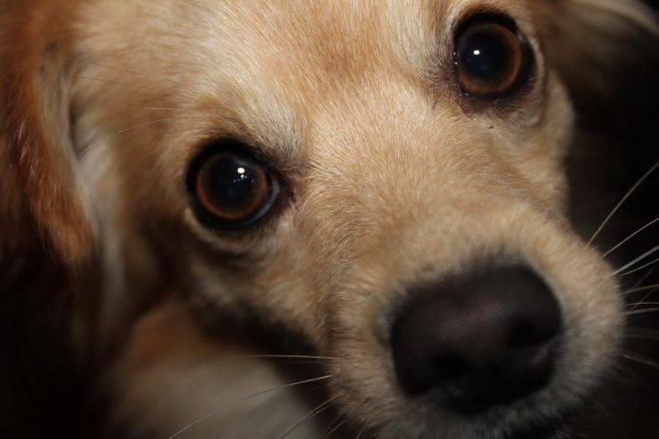 dog puppy eyes