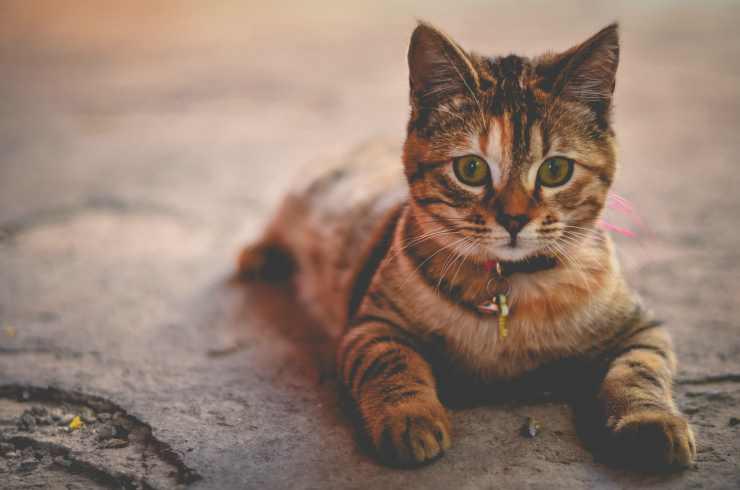 Cat on alert (Pixabay Photo)