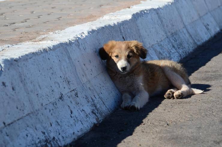 dog ran away street