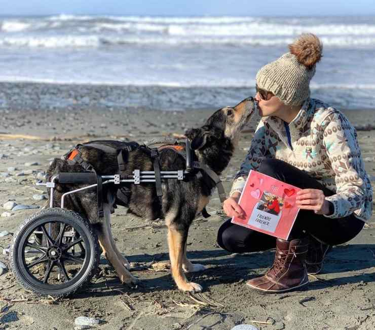 dogs with disabilities