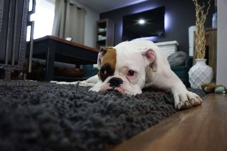 sad little dog snack